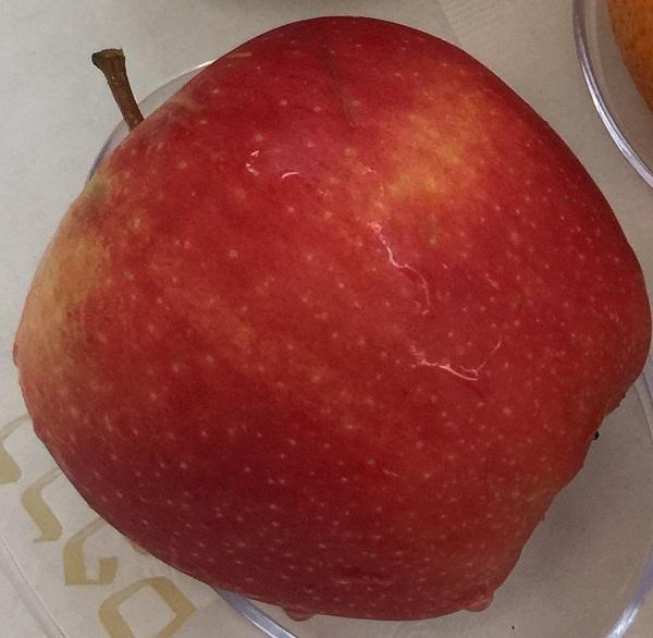 AppleGala600